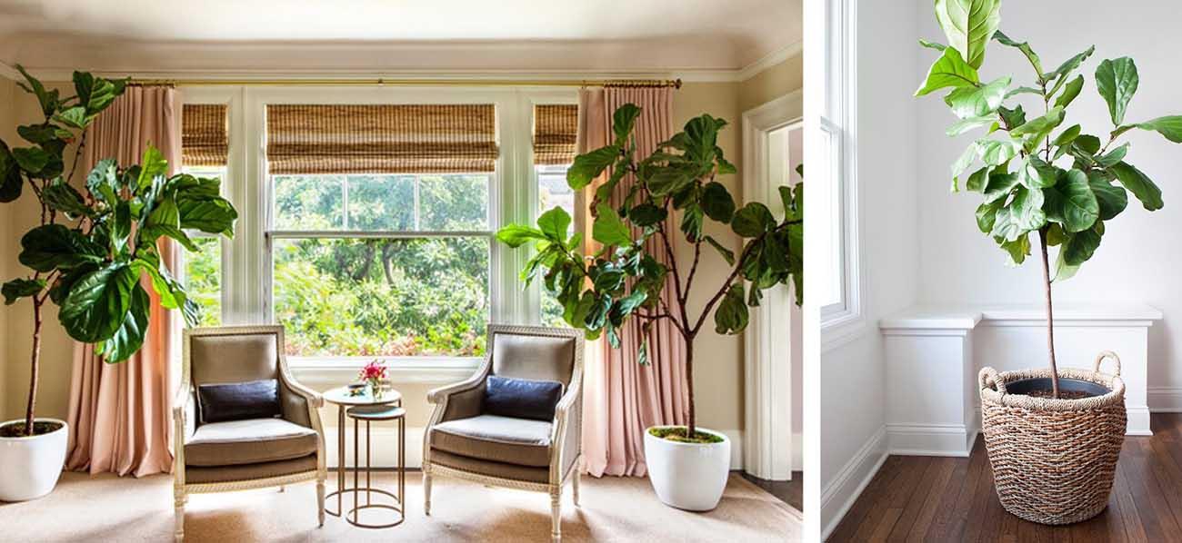 گیاهان آپارتمانی،اصول نگهداری گیاهان